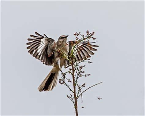 Empathy in to Kill a Mockingbird - Sample Essays